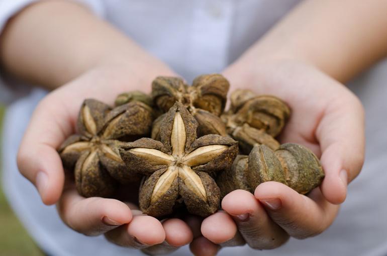印加果油擁有極高營養價值及廣泛保養用途